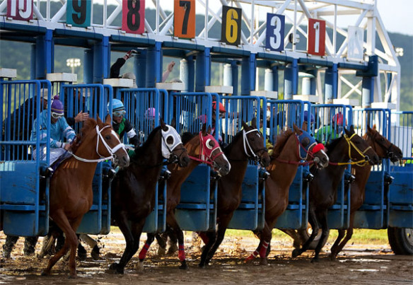 Starting gate at Penn National racecourse. Photographer unknown.