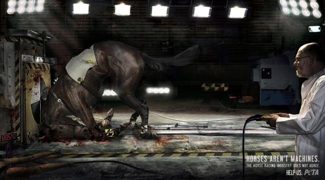 peta - horses aren't machines