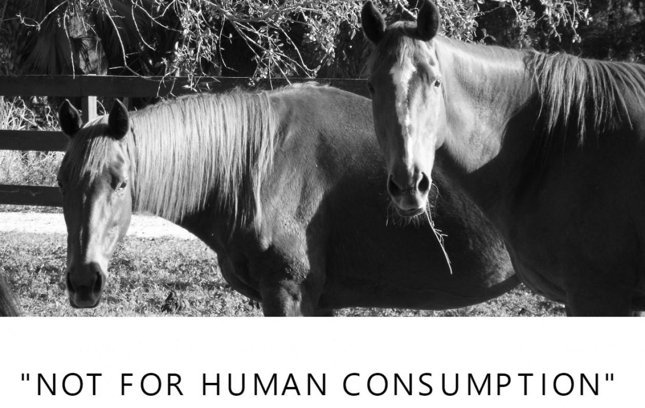Equine Preservation of North America -EPONA